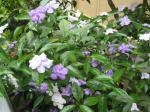 庭に咲いた花